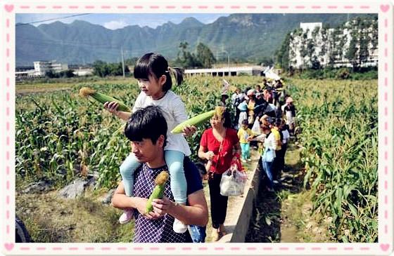 武汉野炊做饭菜园采摘蔬菜